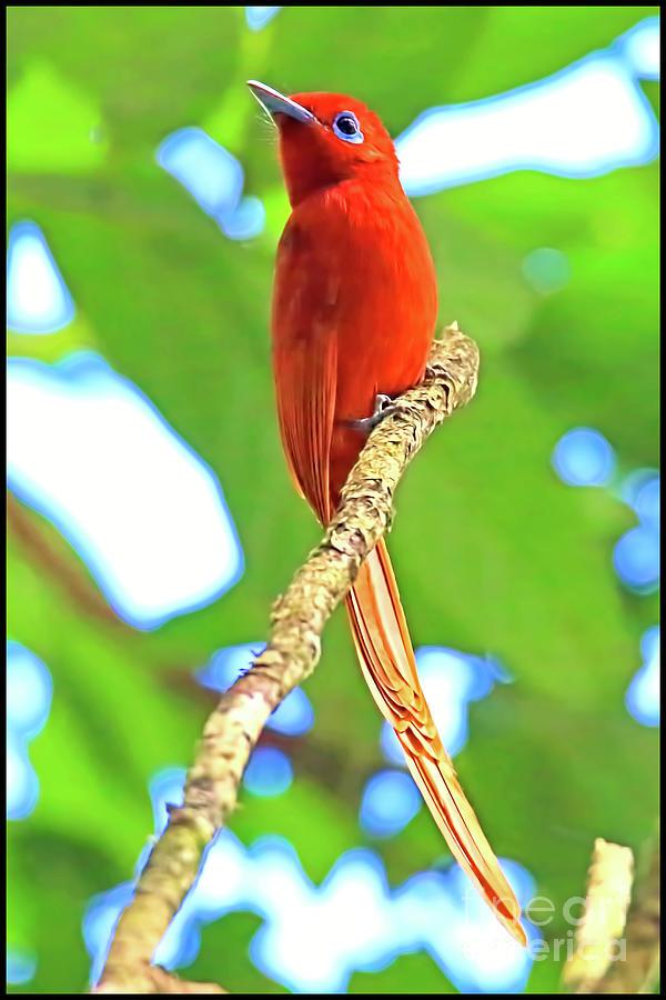 No Name Bird Photograph by Edita De Lima