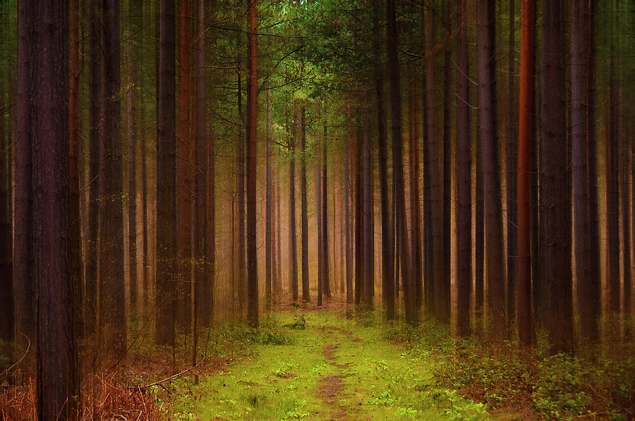 Forest Photograph - No Way Out by Svetlana Sewell