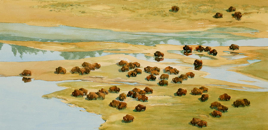 Bison Painting - Nomads by Thomas Sorrell