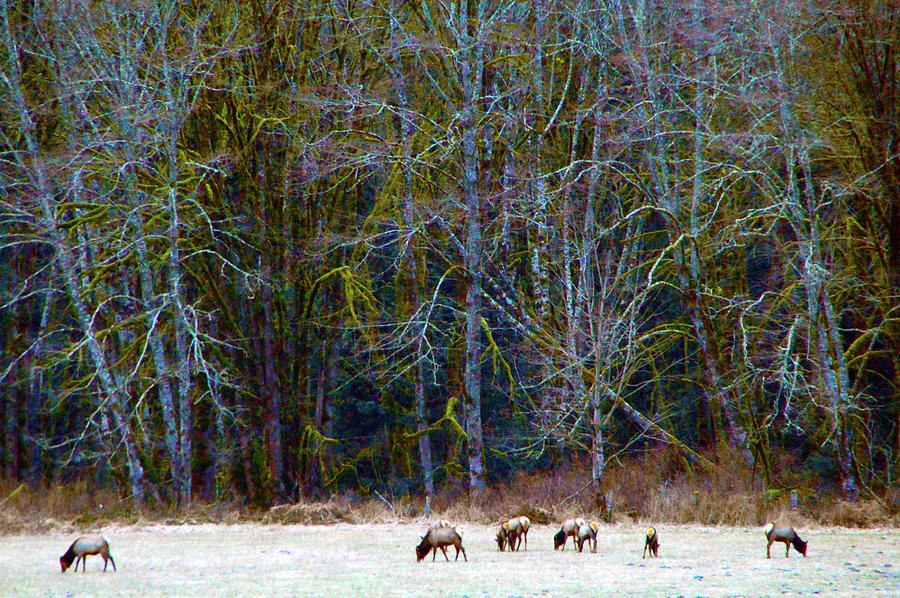 Nooksack Herd Photograph by Brian OKelly