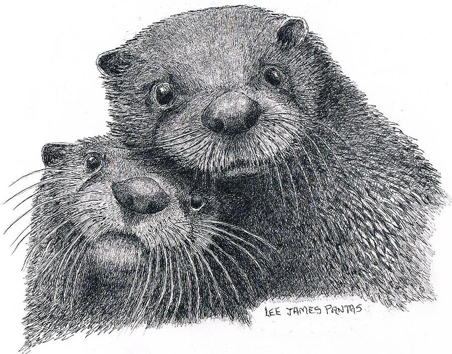 Otter Drawing - North American River Otters by Lee Pantas