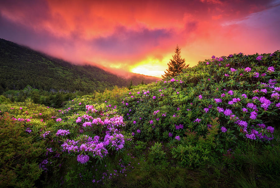 North carolina mountains outdoors landscape appalachian trail spring mountains photograph north carolina mountains outdoors landscape appalachian trail spring flowers sunset by dave allen mightylinksfo