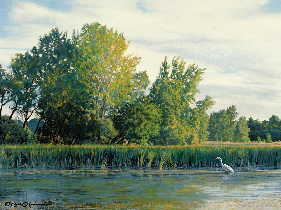 Great Egret Drawing - North Of The Grade-great Egret by Bruce Morrison