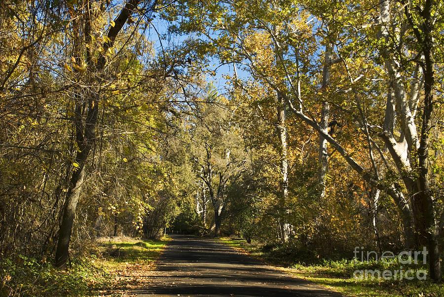Landscape Photograph - North Park Drive by Richard Verkuyl