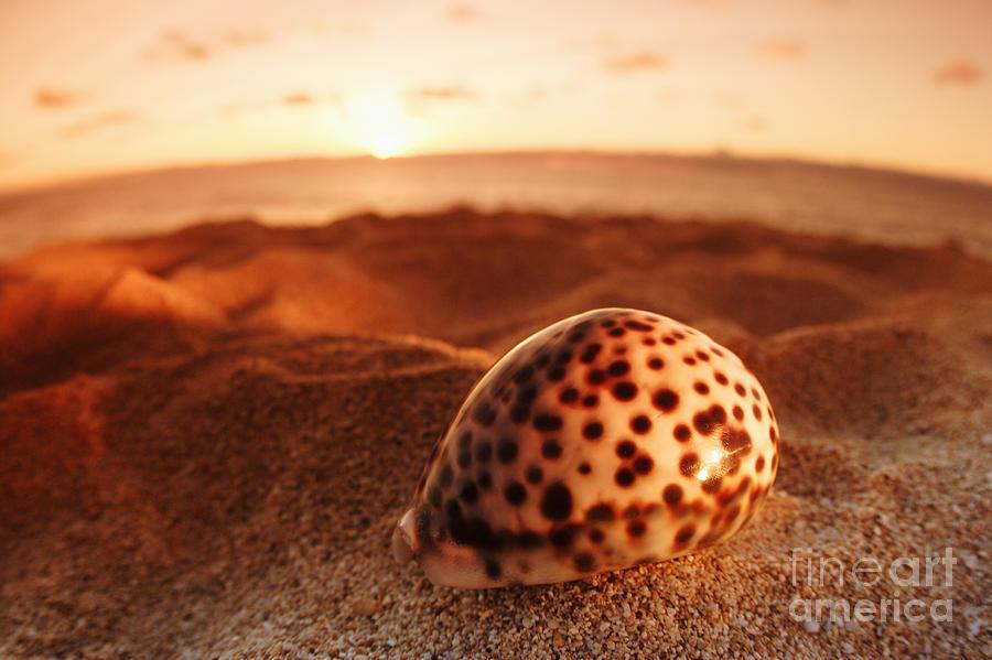 Background Photograph - North Shore Seashell by Vince Cavataio - Printscapes