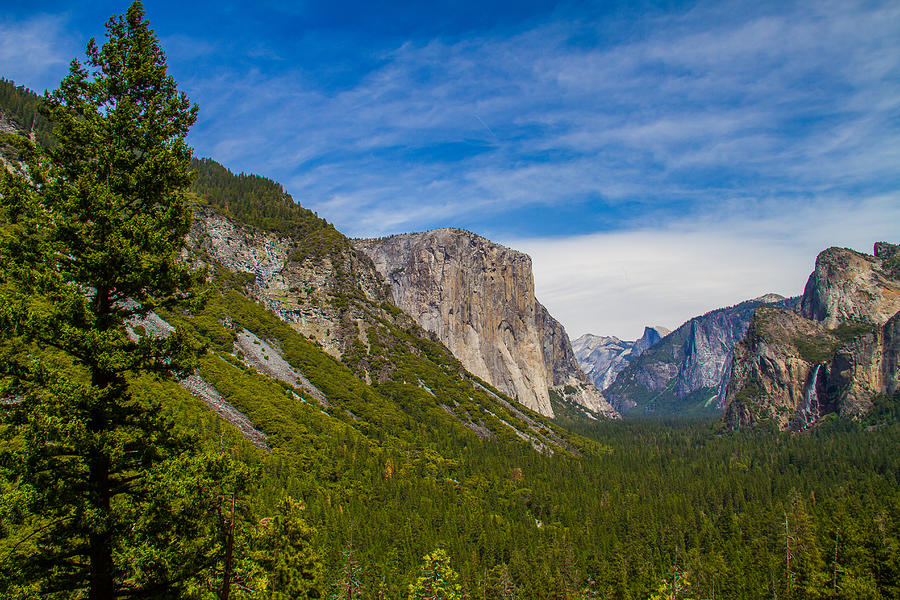 Acrylic Prints Photograph - North Side Of South Valley Of Half Dome by Brian Williamson