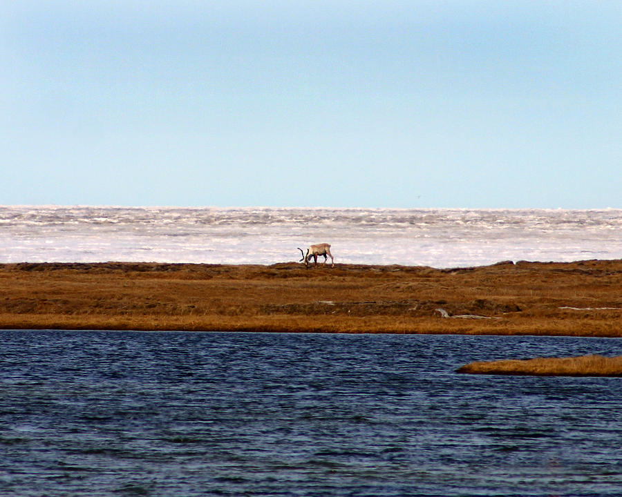 Arctic Photograph - North Slope by Anthony Jones