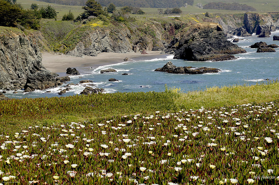 Highway 1 Photograph - Northern California Coast Scene by Mick Anderson