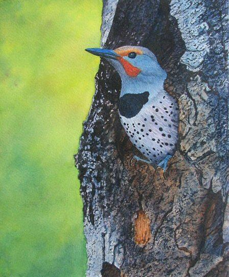 Bird Painting - Northern Flicker by Sharon Farber