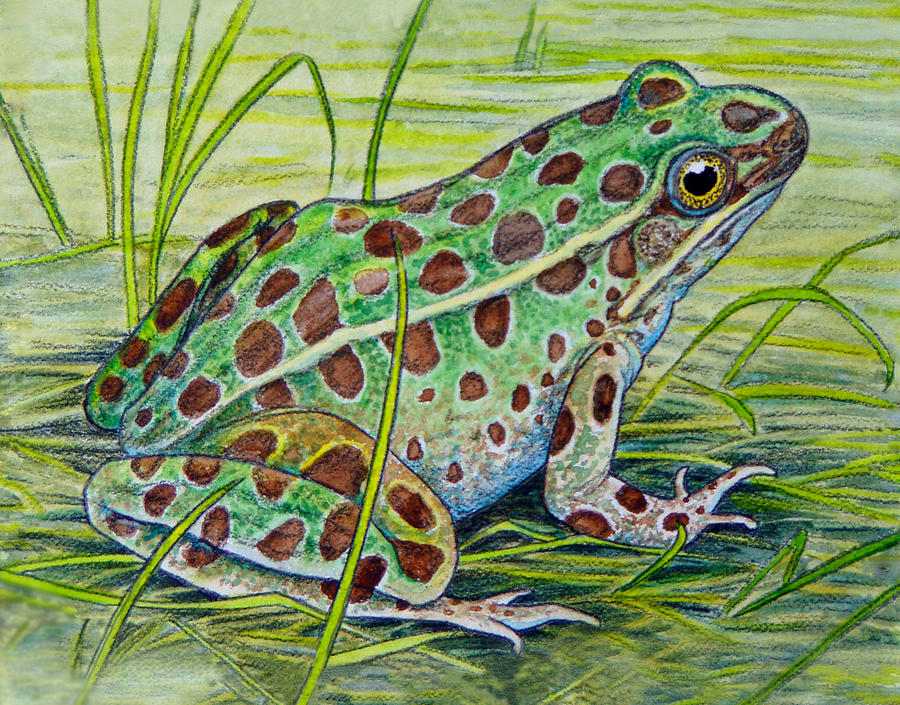 Frog Painting - Northern Leopard Frog by Shari Erickson