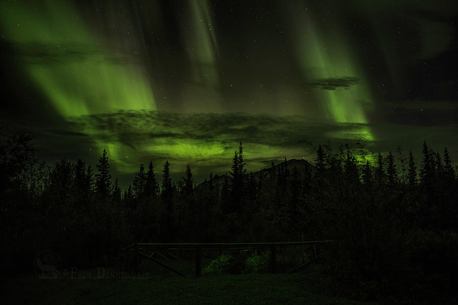 Northern Lights by Fred Denner