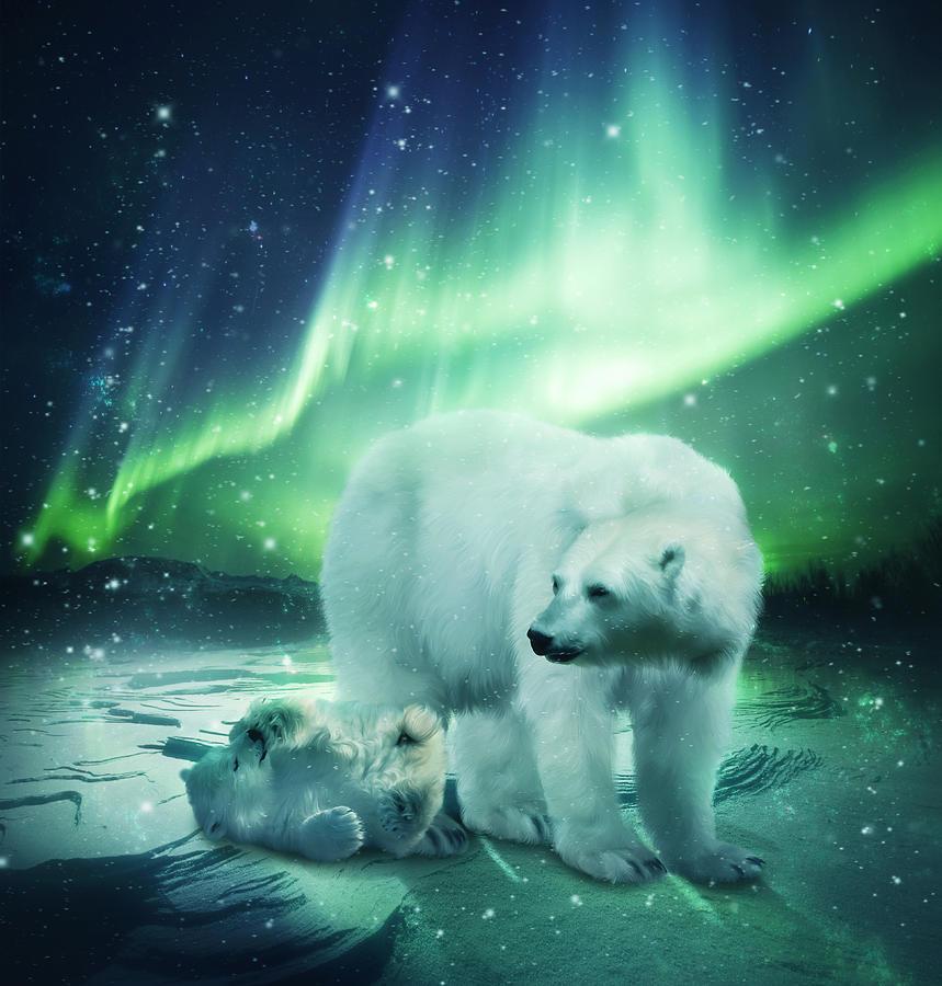 Bears Paint Colors