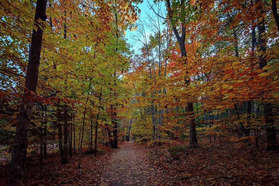 Maple Photograph - Northern Loop Trail by Rick Berk
