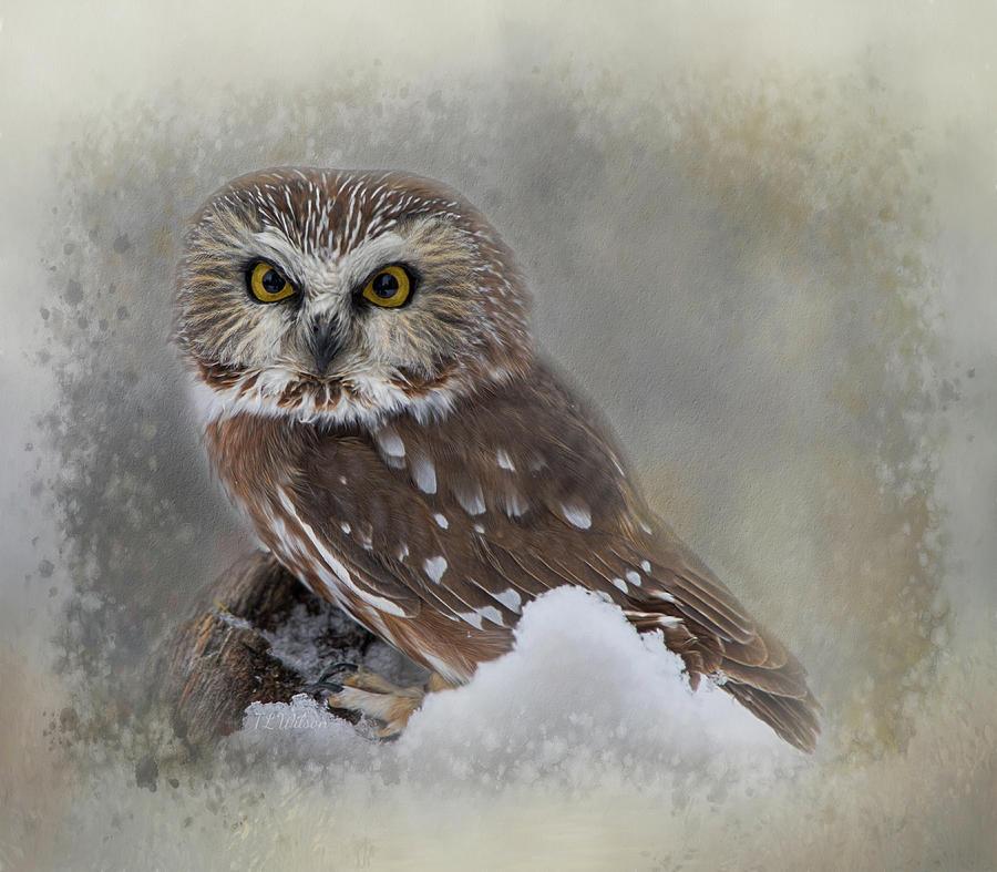 Northern Saw-whet Owl Digital Art