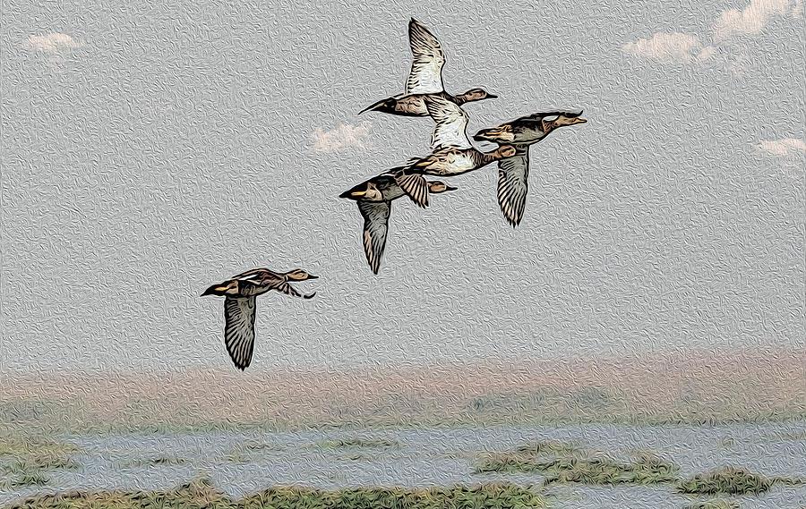 Duck Photograph - Northern Shoveler by Manjot Singh Sachdeva