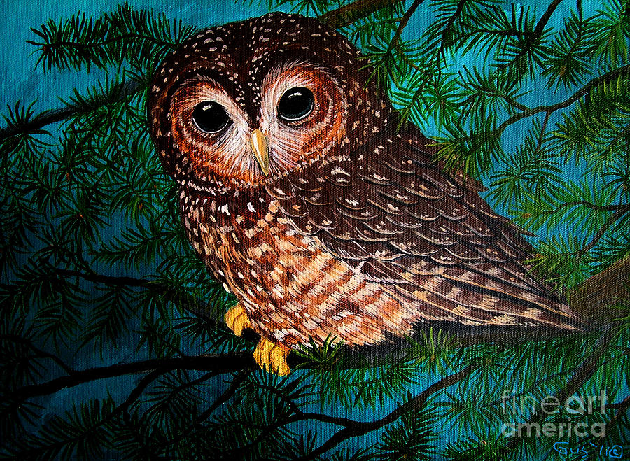 Owl Artwork Painting - Northern Spotted Owl by Nick Gustafson