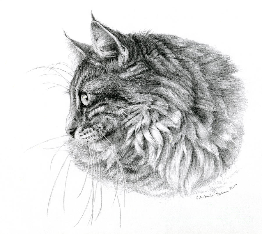 Cat Drawing - Norwegian Forest Cat by Svetlana Ledneva-Schukina