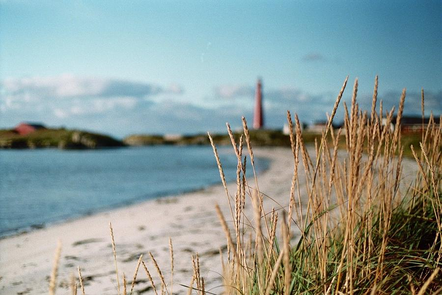Andenes Photograph - Norwegian Grass by Gregory Barger