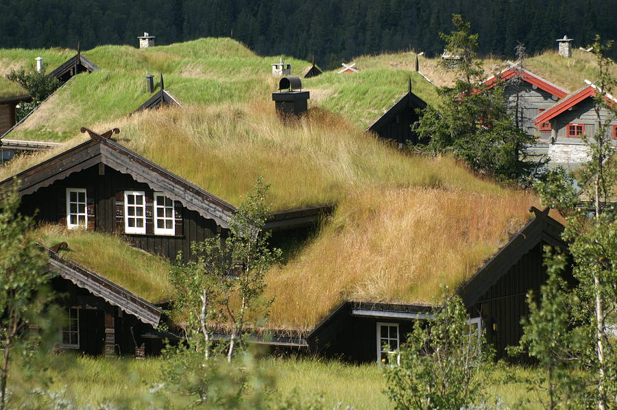 Roof Photograph - Norwegian Grass Roofs by Jessica Rose