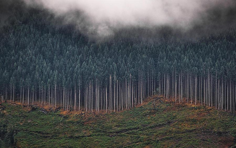 Norwegian Wood And Cloud