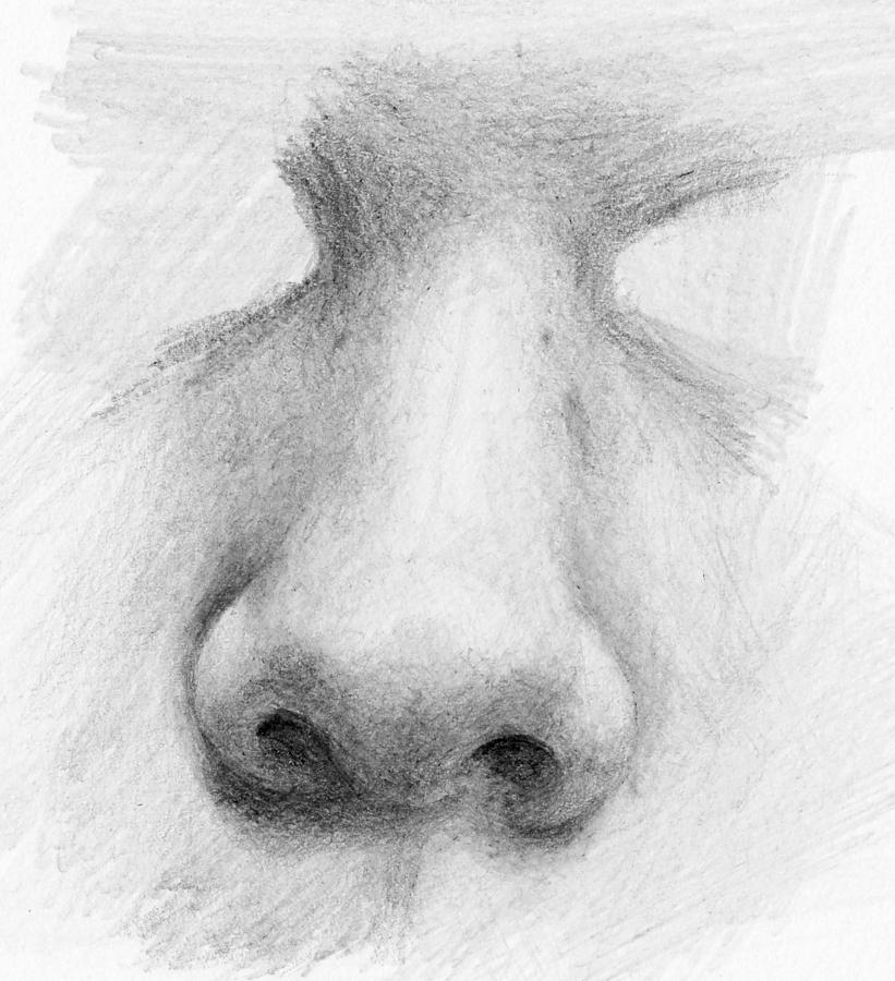 Pencil Drawing - Nose Study - Front by Nolan Clark