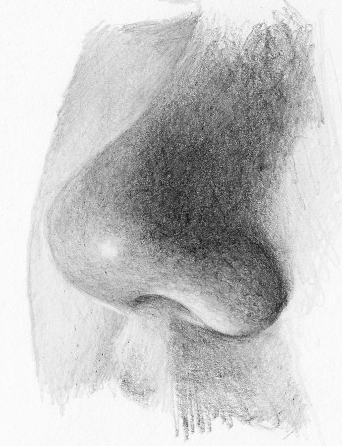 Nose Study - Side Drawing by Nolan Clark