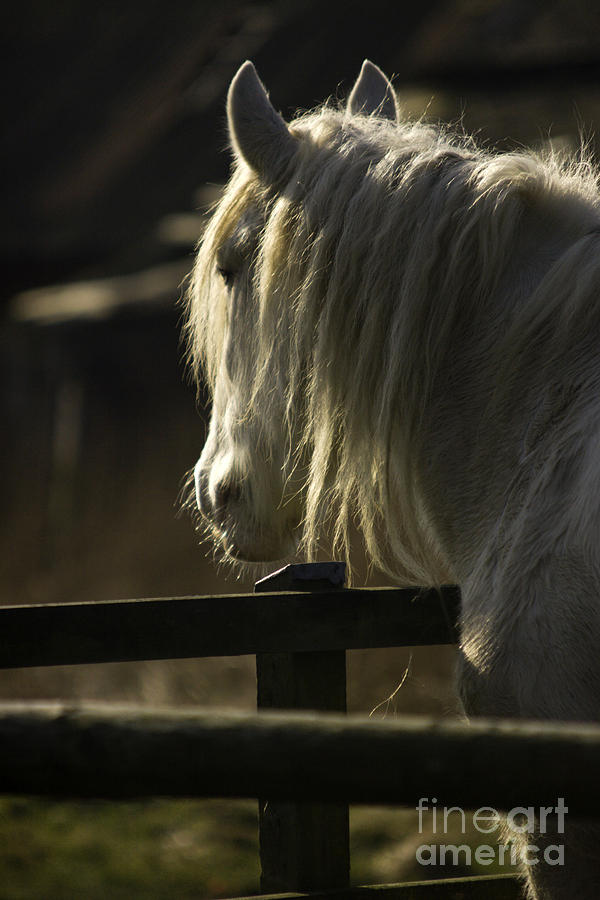 Horse Photograph - Nostalgy by Angel Ciesniarska