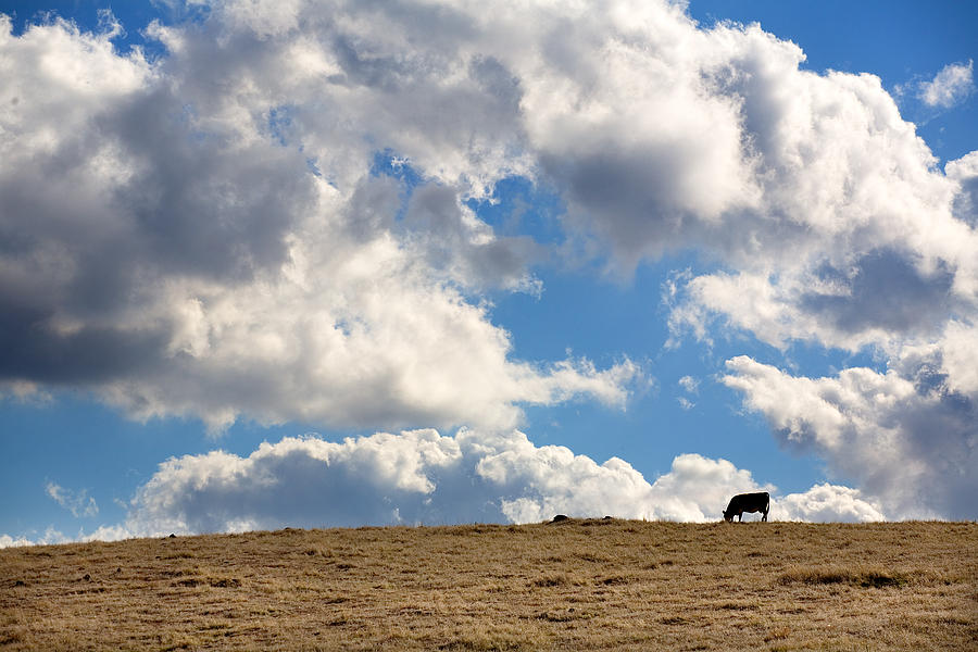 Big Sky Photograph - Not a Cow in the Sky by Peter Tellone
