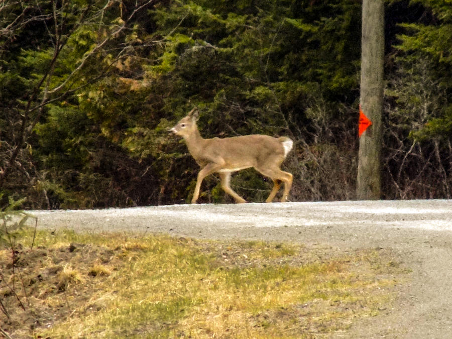 Not A Safe Place For A Deer by William Tasker