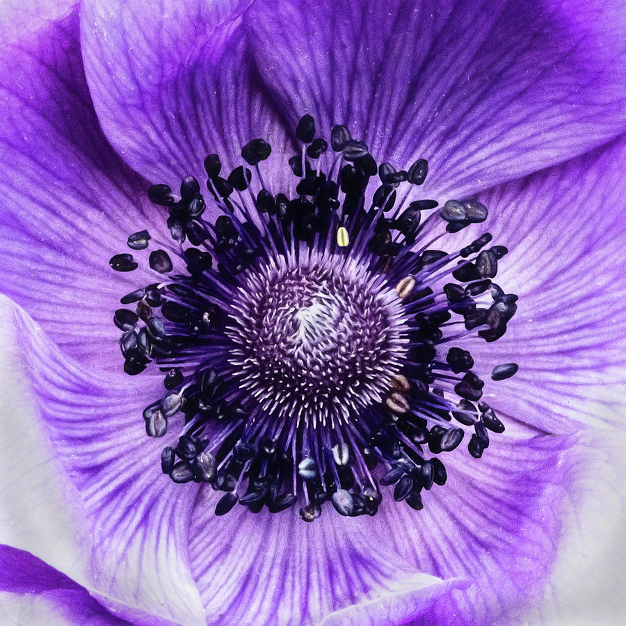 Purple Photograph - Not Like The Rest Of Them by Jessica Manelis