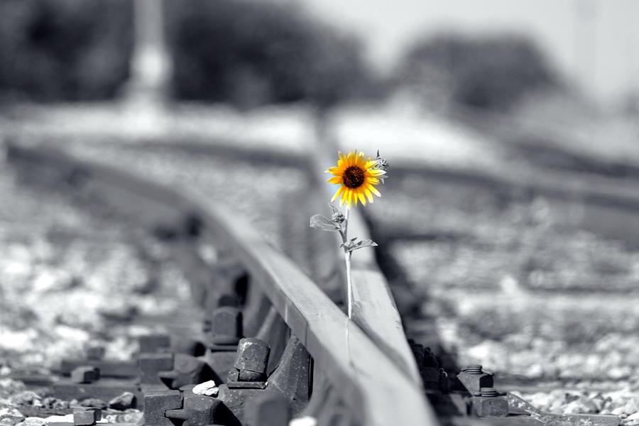 Rail Photograph - Not So Desolate by Elizabeth Hart