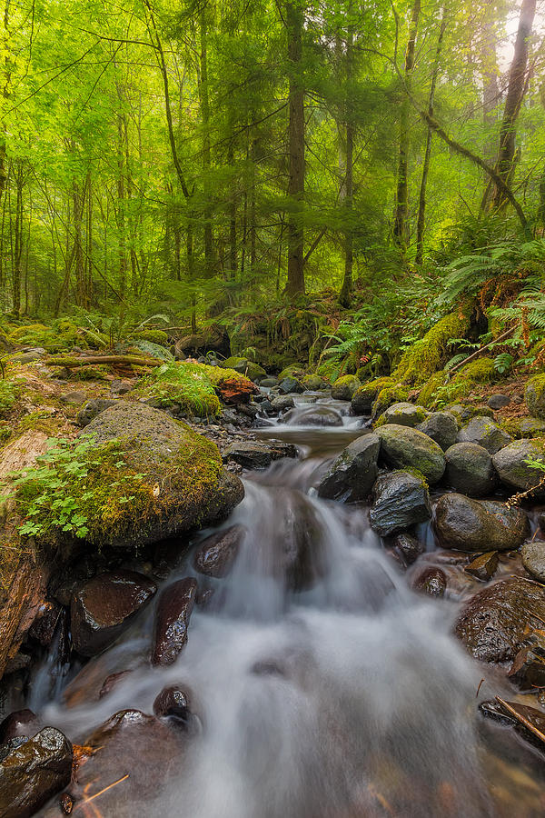 Dry Creek Photograph - Not-so-dry Creek by David Gn