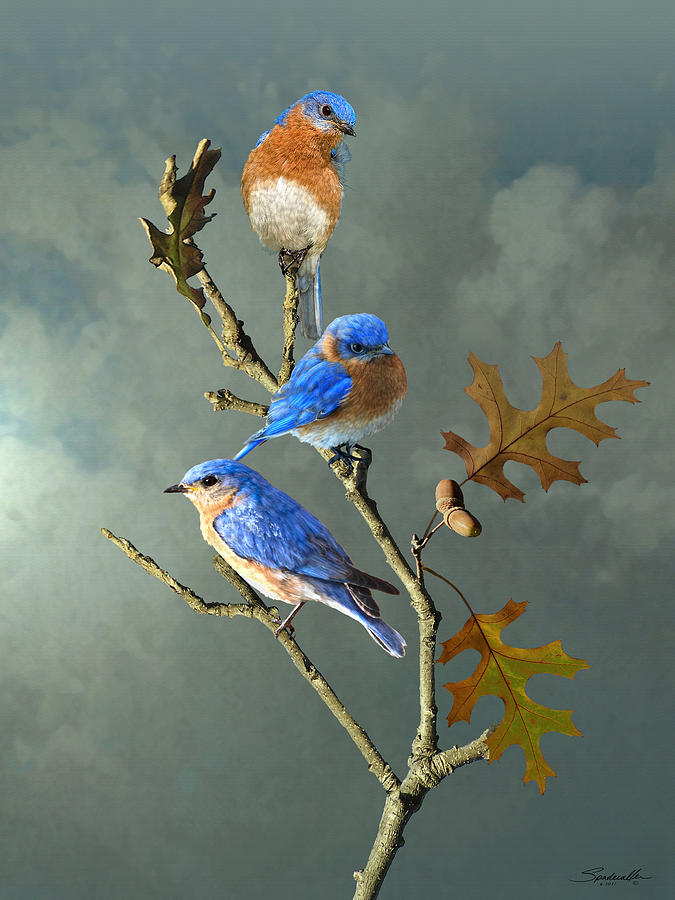 Birds Digital Art - Nothing But Bluebirds by IM Spadecaller