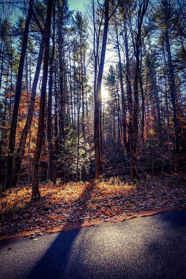 November light Photograph by Kendall McKernon