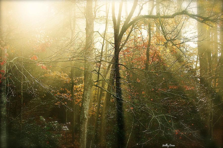 Sun Rays Photograph - November Light by Molly Dean