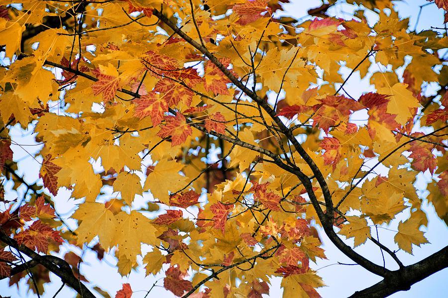 Autumn Photograph - November Twilight by JAMART Photography