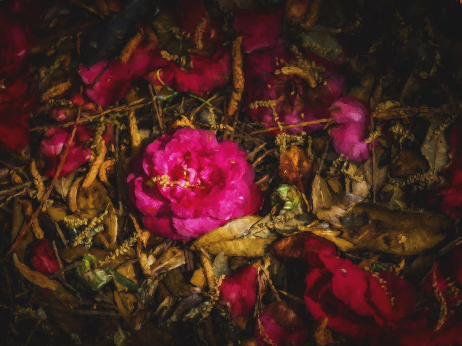 Camellia Photograph - Transitions by David Kay