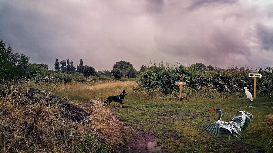 Dog Photograph - Now What by Gabriele Pomykaj - Isabella Shores
