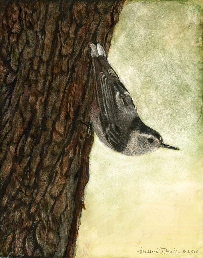 Wildlife Painting - Nuthatch Acrobat by Susan Donley