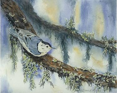 Nuthatch Painting - Nuthatch by Dolores Fegan
