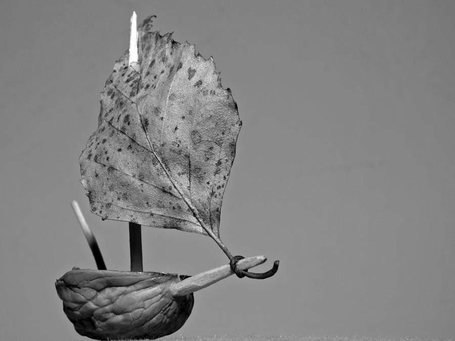 Sculpture Photograph - nutshell sailboat BW by Shu Fu