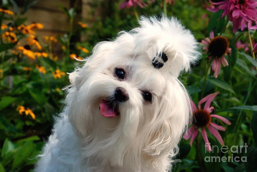 Dog Photograph - Nuttin But Love by Lois Bryan