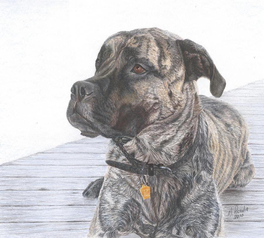 Dog Drawing - Nyla by Marlene Piccolin