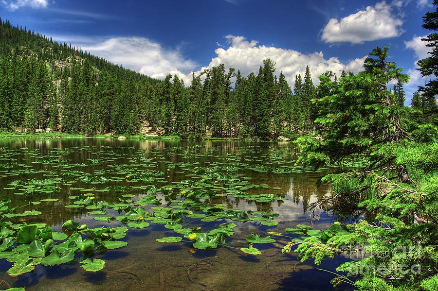 Landscape Photograph - Nymph Lake by Pete Hellmann