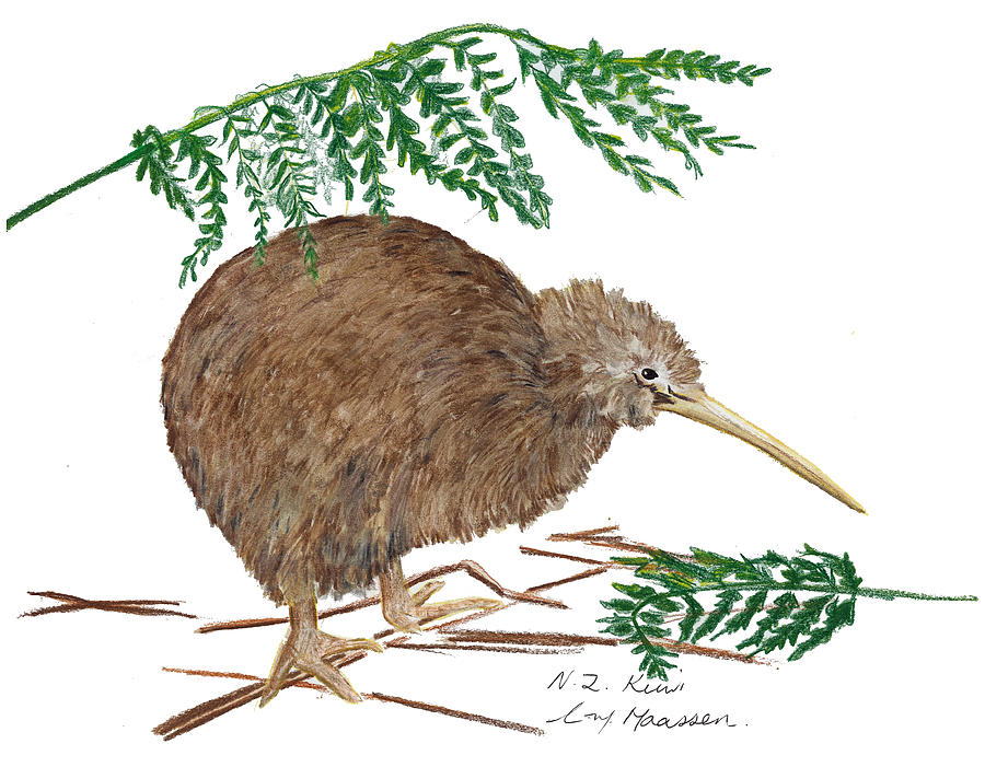 Nz Native Kiwi Bird Drawing By Christina Maassen