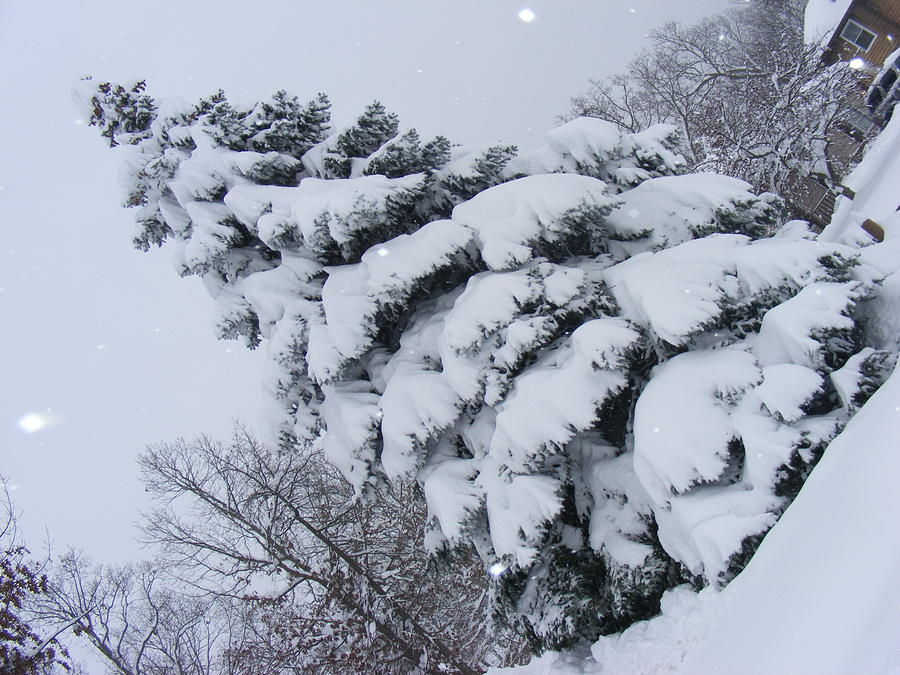 Blizzard Photograph - O Christmas Tree by James and Vickie Rankin