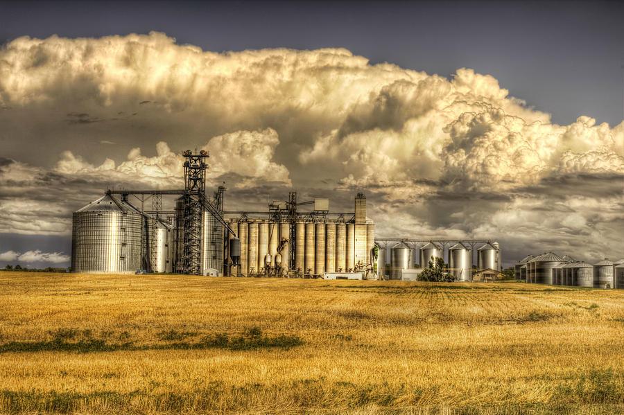 Oahe Grain by Michele Richter