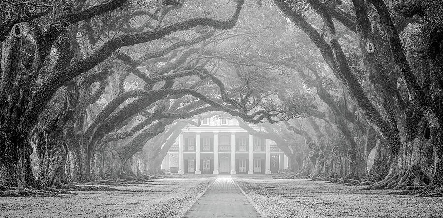 Oak Alley fog by Andy Crawford