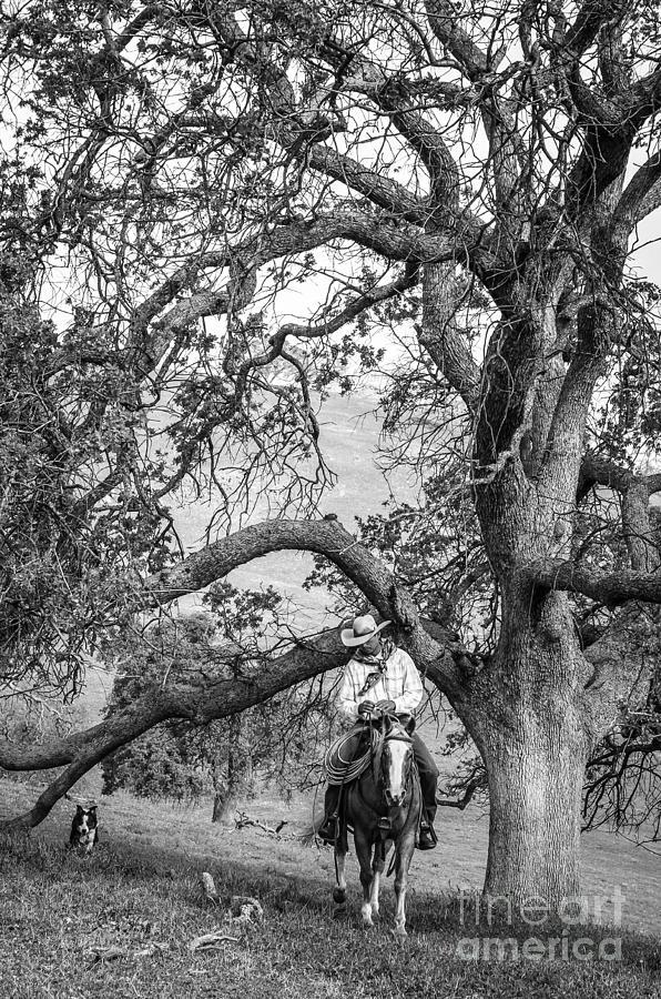 Oak Arches by Diane Bohna