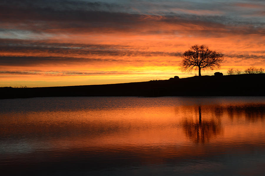 Tree Photograph - Oak at sunrise by Andrea Gabrieli